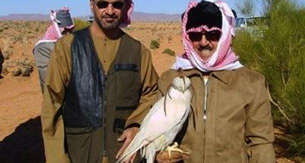 saker-falcon-arabs608