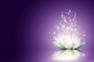 magic-lotus-flower