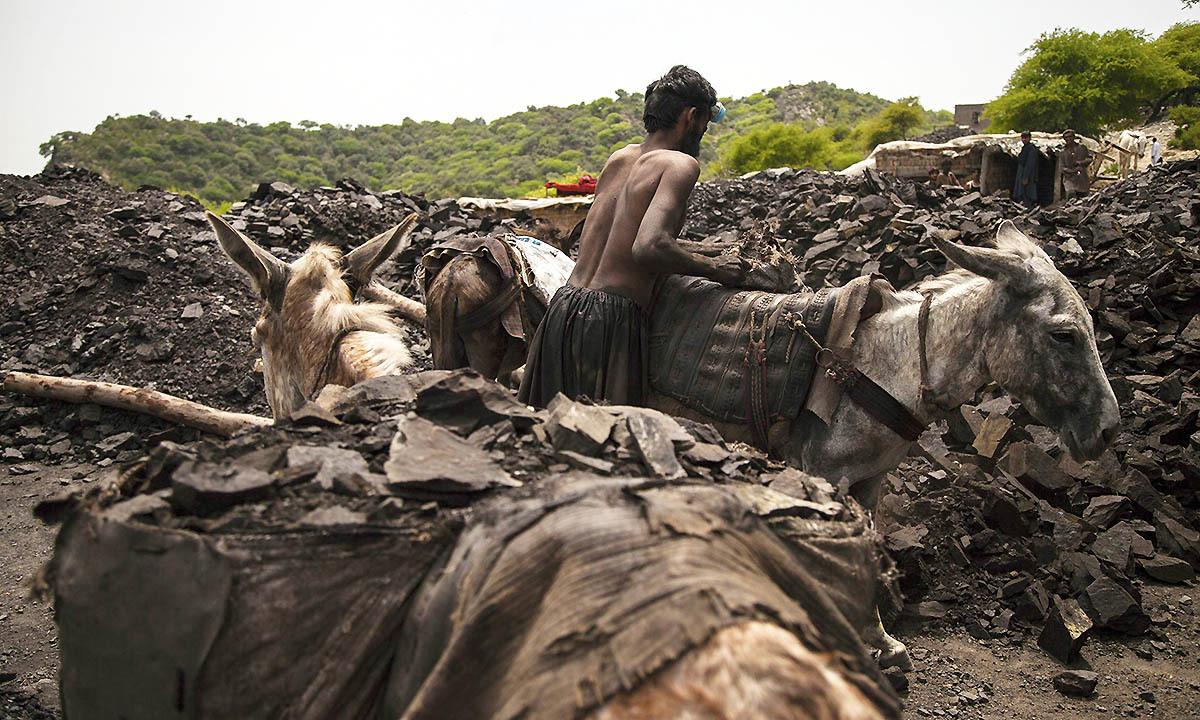 A miner unloads coal as he stands in a coal field in Choa Saidan Shah, Punjab province